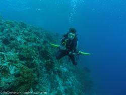 BD-060410-Moalboal-4100882-Homo-sapiens.-Linnaeus.-1758-[Diver].jpg